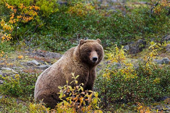 Bear Viewing Homer Alaska
